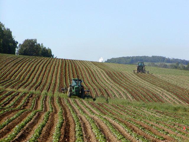 Tracteurs dans un champ de pomme de terre